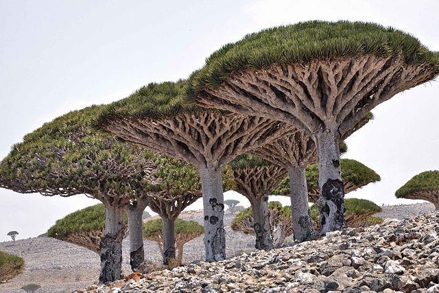 Islas donde perderse - Socotra